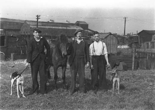 Whippets and a pit pony